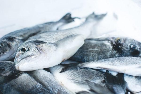 Riba: Koju treba jesti, a koju izbegavati